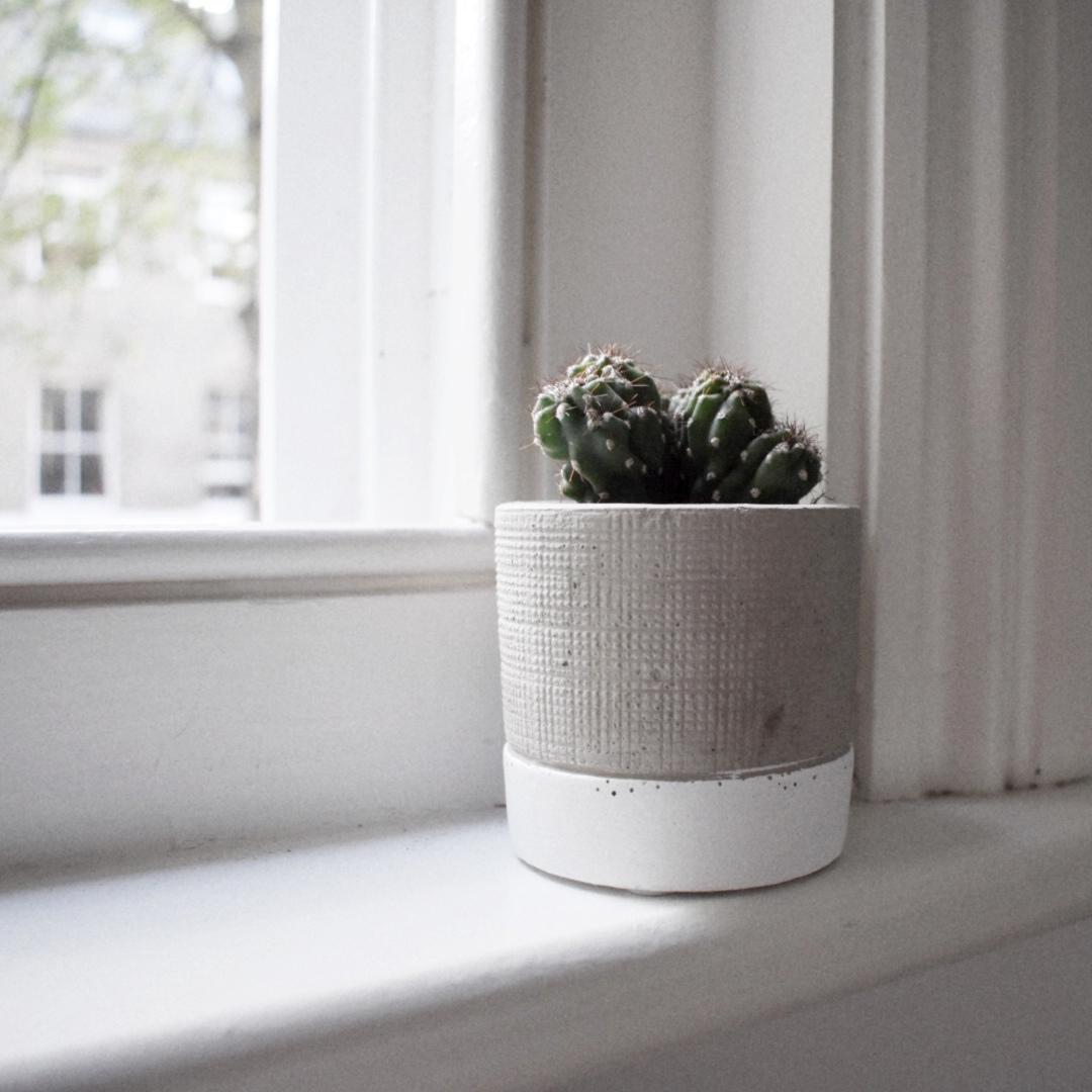 Cactus on windowsill