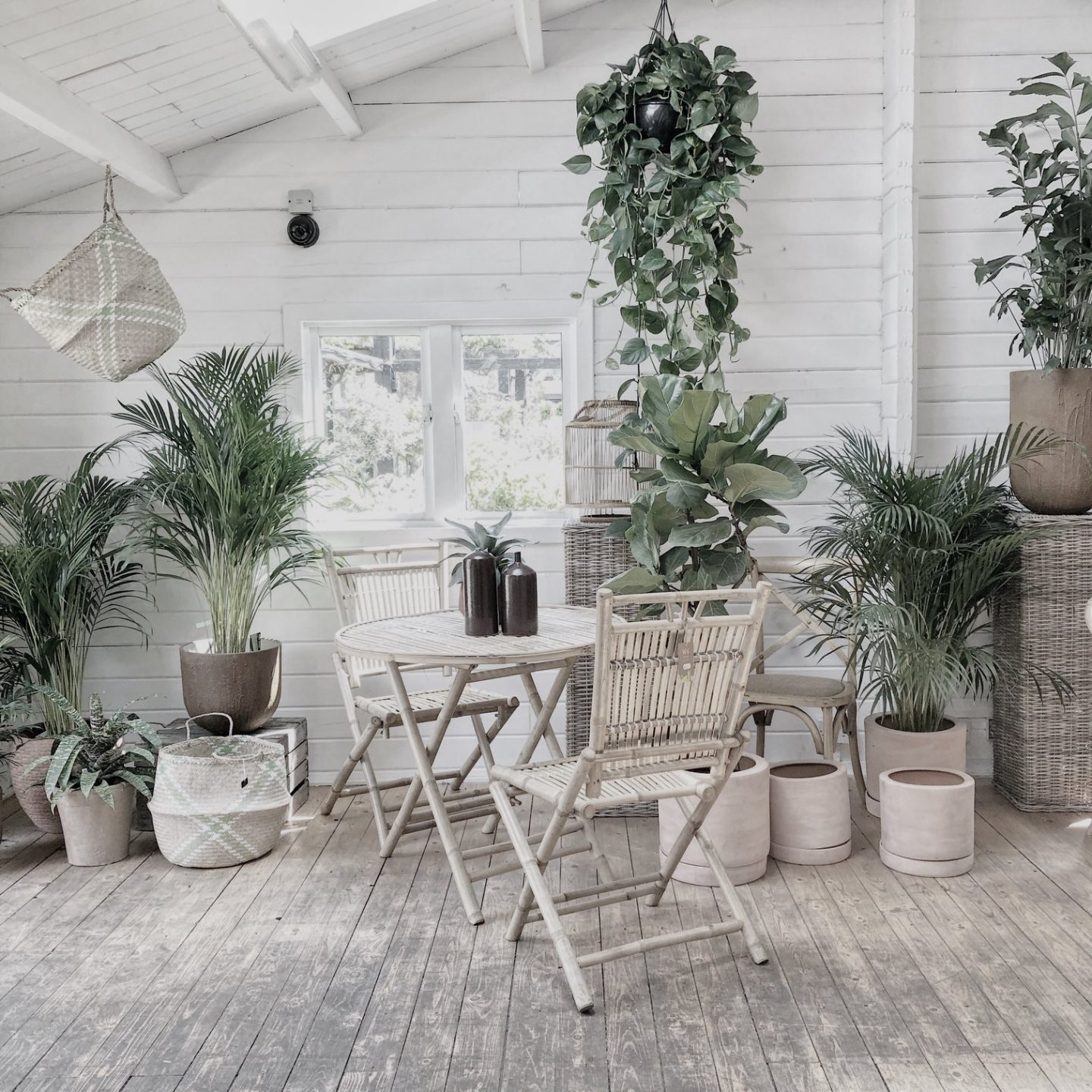 Jungalow style at W6 Garden Centre, one of London's plant shops