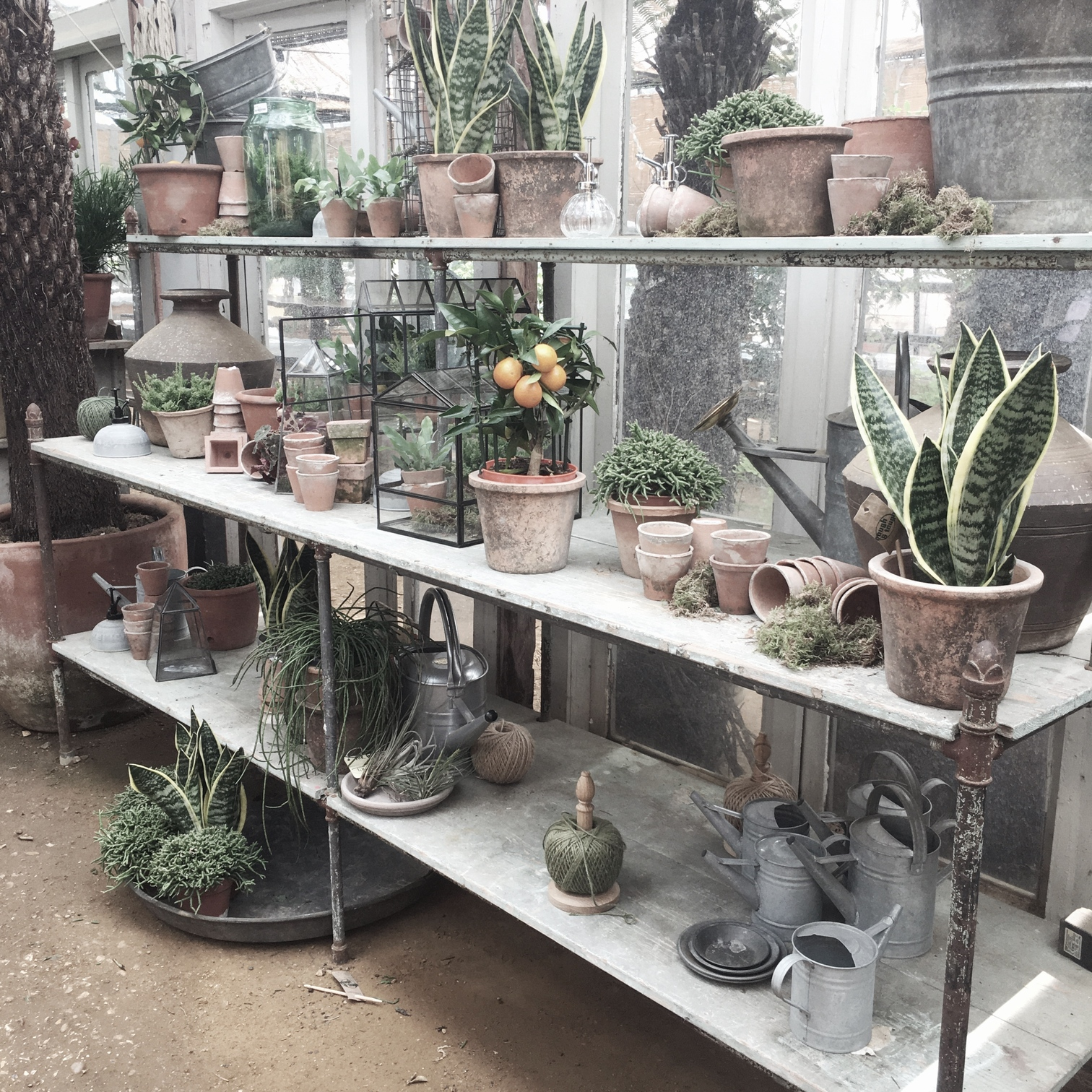 Plants at Petersham Nurseries