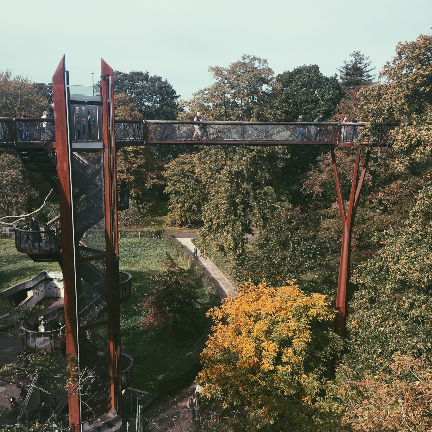Treetop Walkway Kew in Autumn
