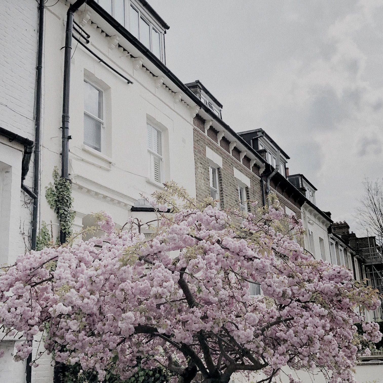 Pink cherry blossom in London - where to get back to nature
