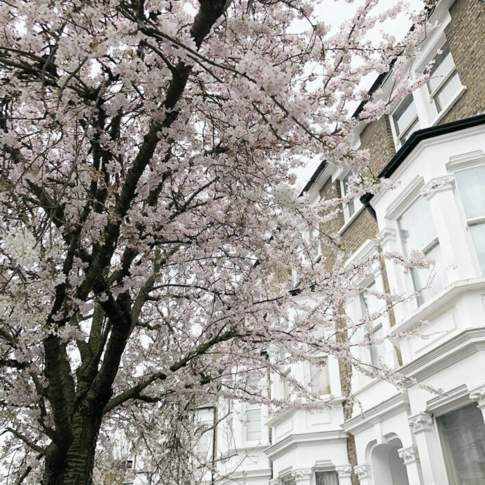 Where to See Blossom in London