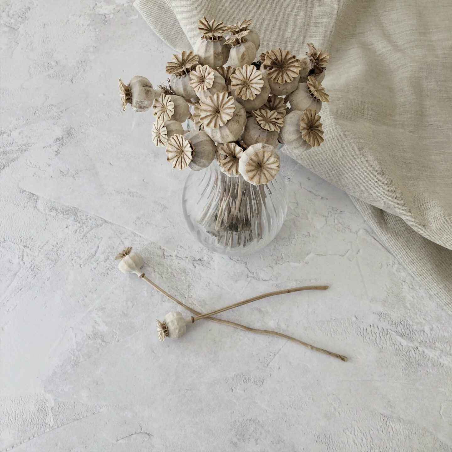 Dried poppy heads in a vase