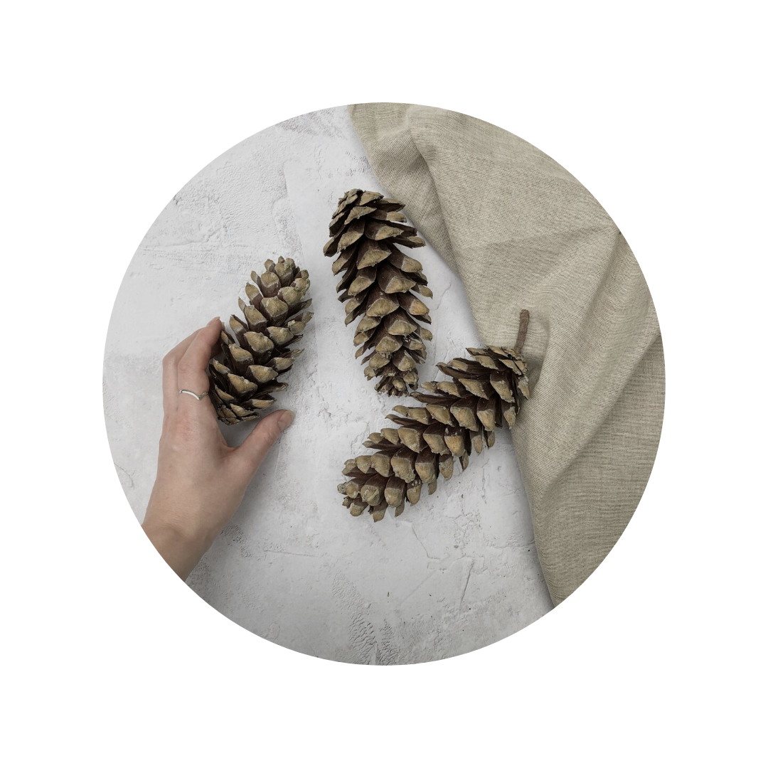 Pine cone flatlay