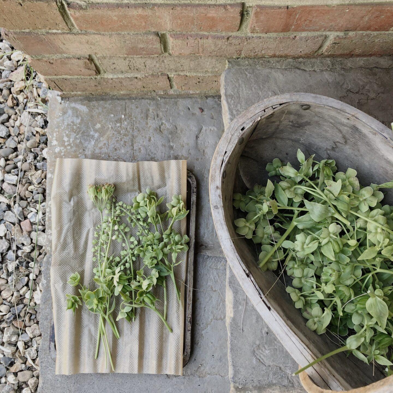 Cut plants in a trug