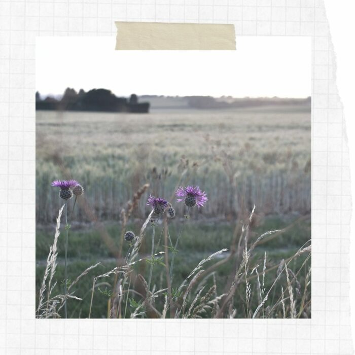 Slow Scrapbook: Fields in Fading Light
