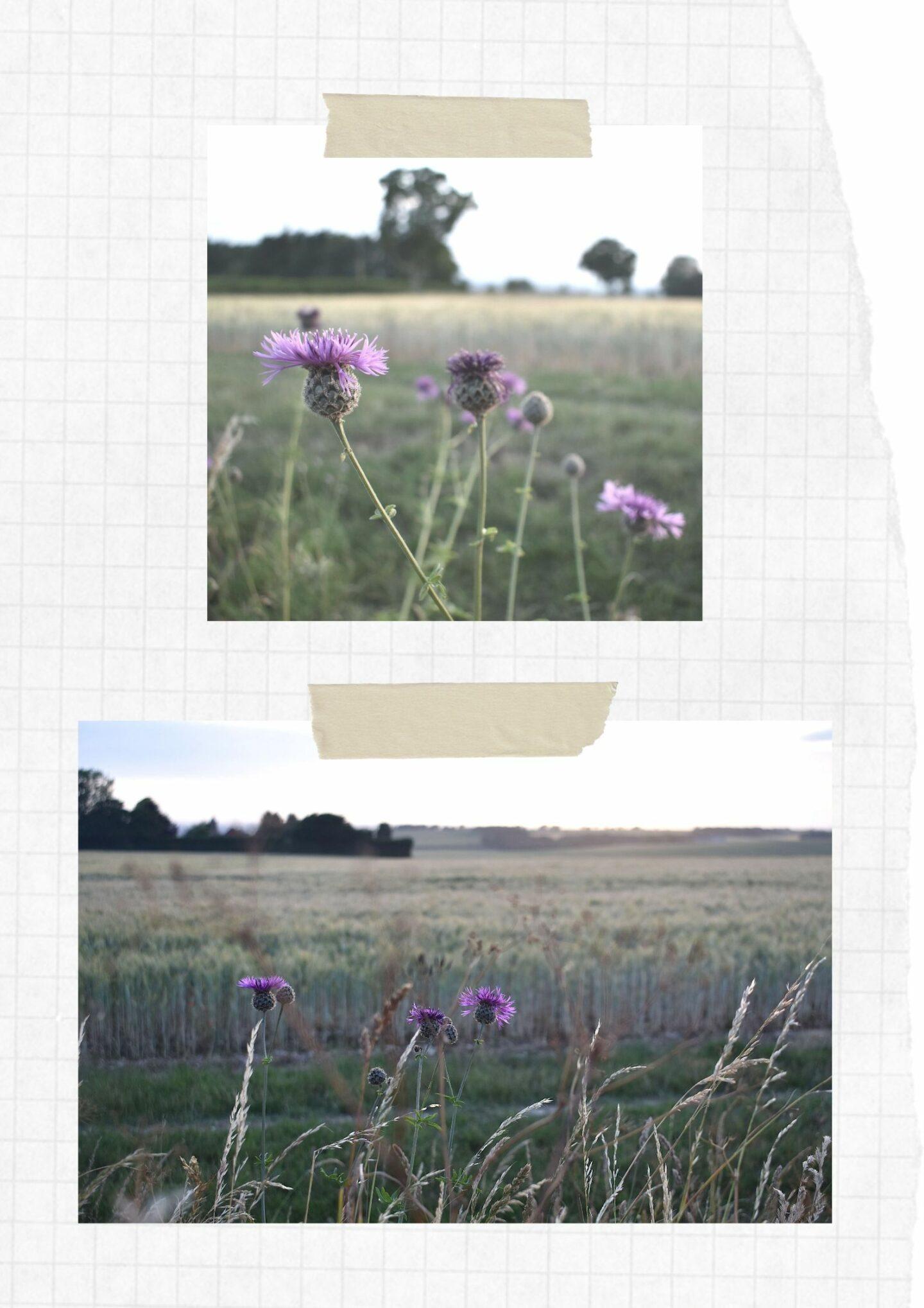 Scrapbook of summer fields