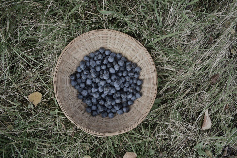 Sloe berries in a basket