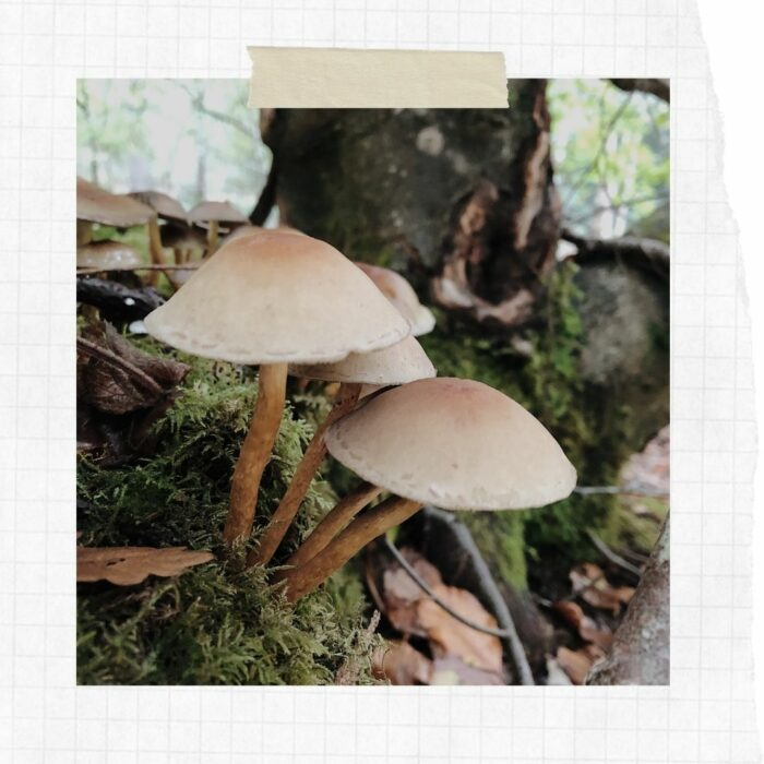 Slow Scrapbook: Autumnal Woodland Walks
