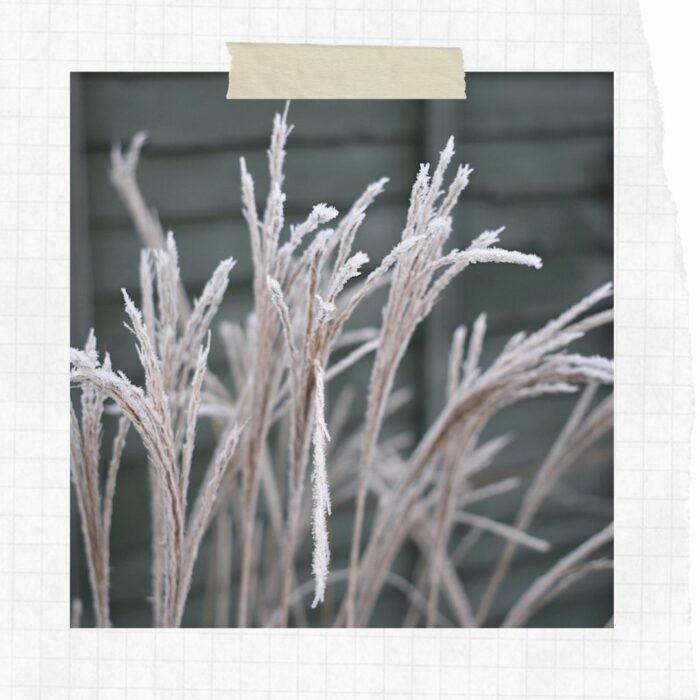 Slow Scrapbook: Winter Frost