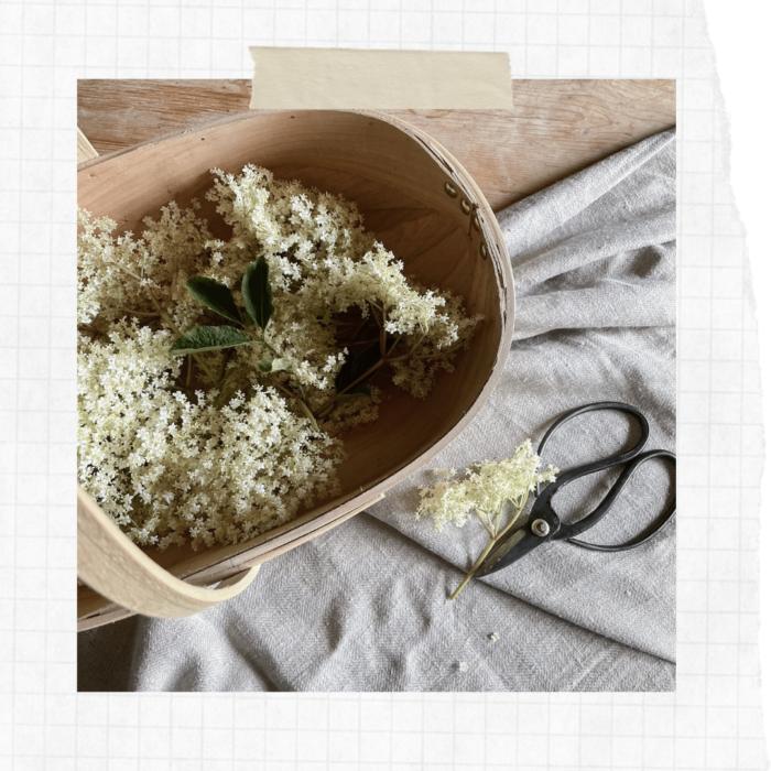 Slow Scrapbook: Foraged Summer Elderflower Guide