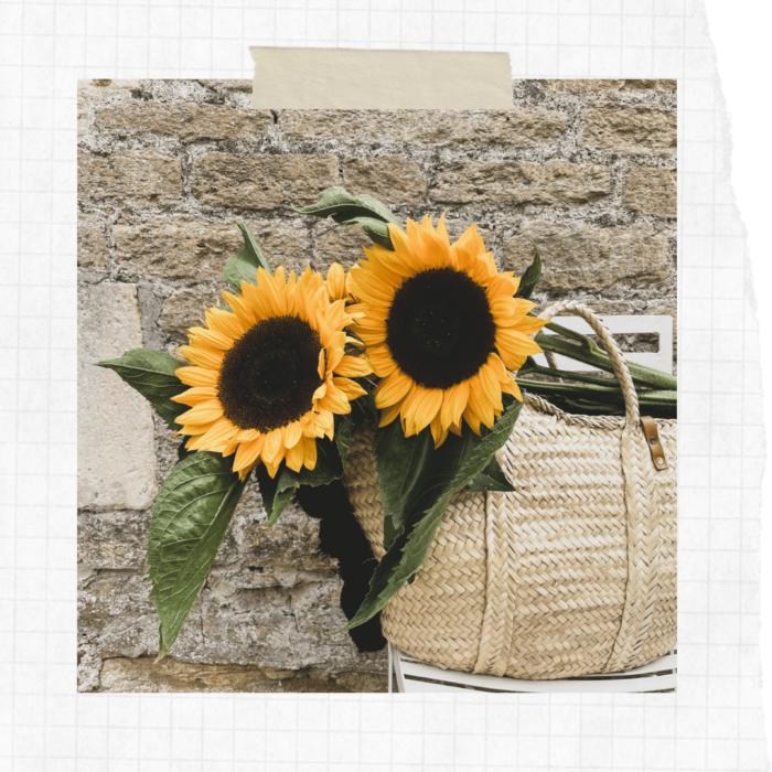 Slow Scrapbook: Seeking Sunflowers